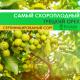 Грецкий Орех Кочерженко Скороплодный 2-х годичный