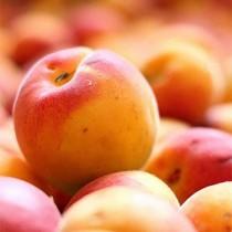 Колоновидный абрикос Радости жизни