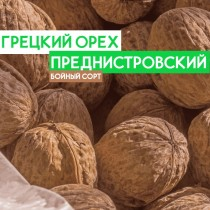 Саженцы грецкого ореха Преднистровский 2-х летний