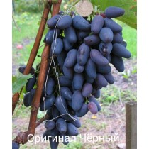 Виноград Оригинал черный