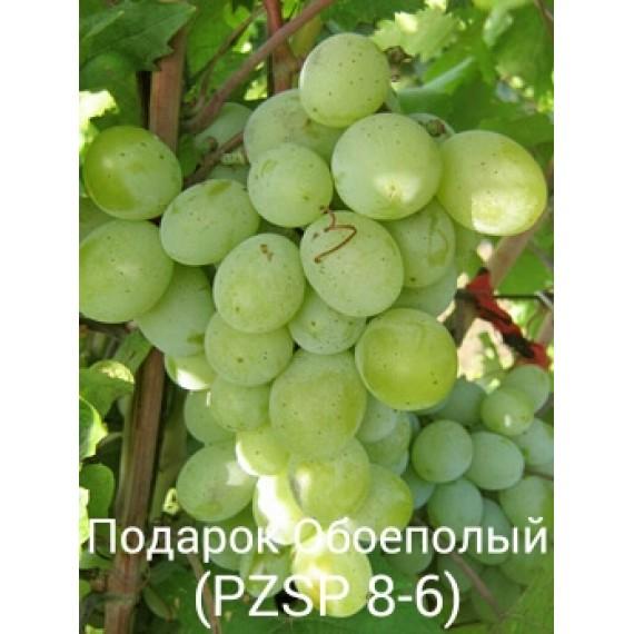 Виноград Подарок Обоеполый