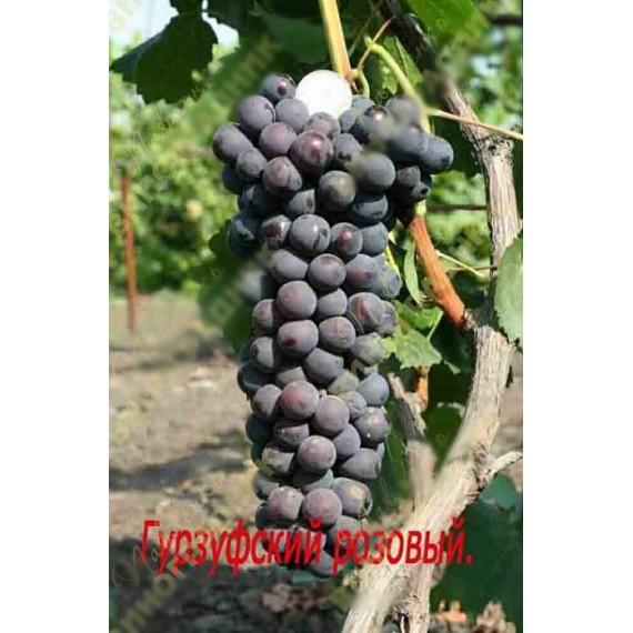 Виноград Гурзуфский Розовый