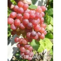 Виноград Голд
