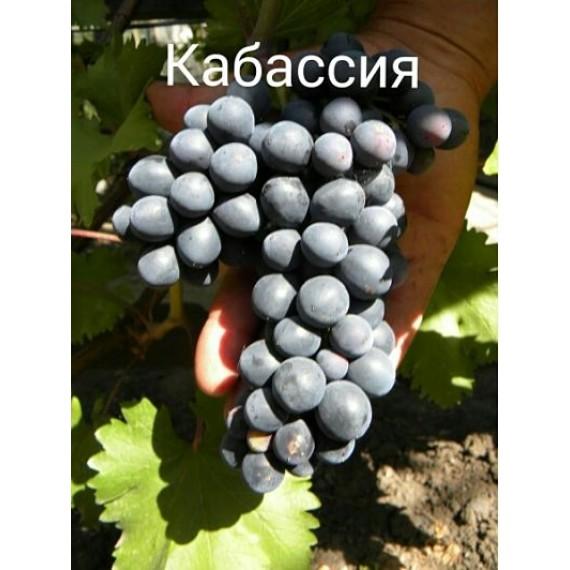 Виноград Кабассия