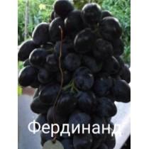 Виноград Фердинанд
