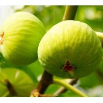 Инжир Закавказский зелёный