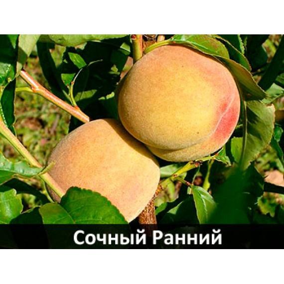 Персик Сочный ранний