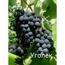 Виноград Уголек