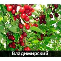 Кизил Владимирский